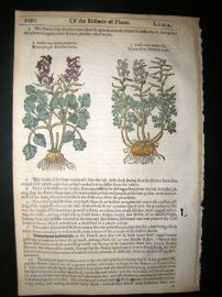 Gerards Herbal 1633 Hand Col Botanical Print. Hollow Root